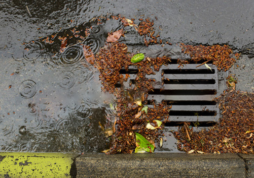 clogged catch basin